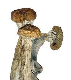 ecuador-mushrooms